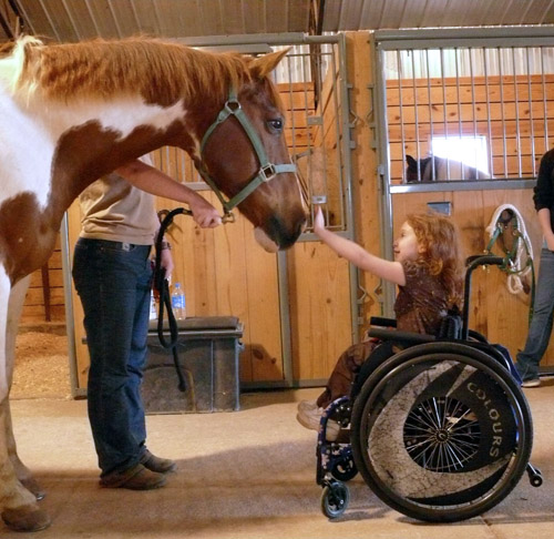 animal therapy Animal-assisted therapy is a therapeutic intervention that incorporates animals, such as horses, dogs, cats, pigs, and birds, into the treatment plan it is.